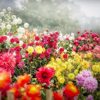 Urządzamy eko ogródek w 5 krokach